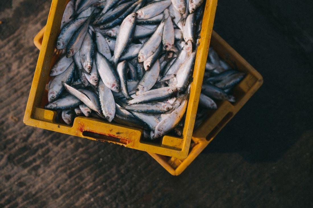 Почему ни в коем случае нельзя есть сырую рыбу