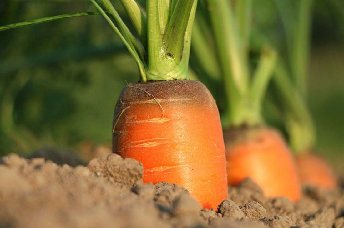 Посадите эти овощи, и ваш урожай станет сенсацией