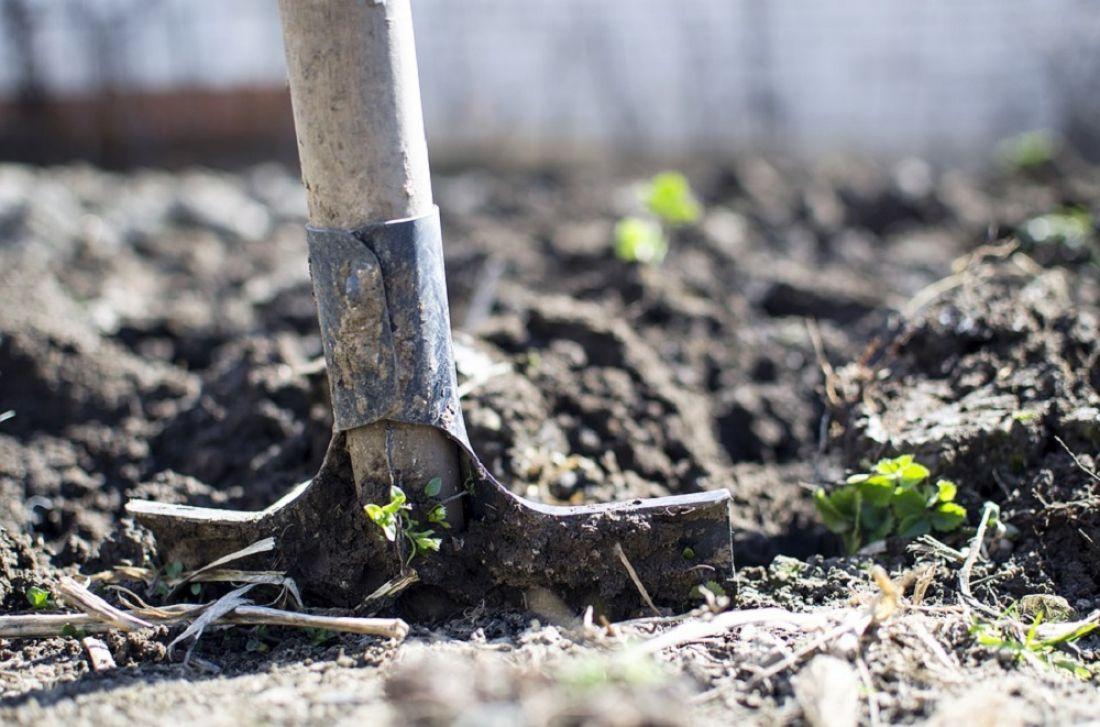 Какие работы нужно успеть провести в саду и огороде в апреле