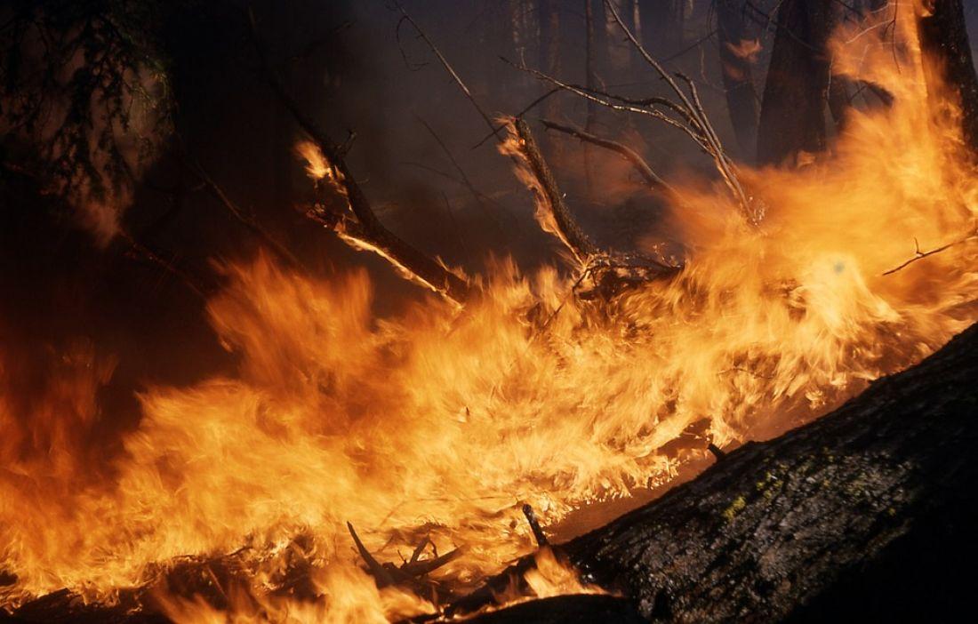 В Пензенской области природный пожар был потушен в течение часа